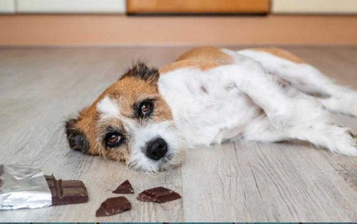 مواد سمی خانگی برای حیوانات خانگی