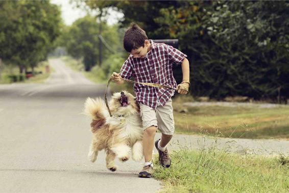 خرید حیوانات خانگی مناسب