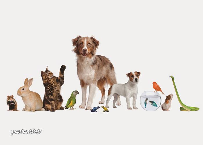 خرید حیوان خانگی مناسب