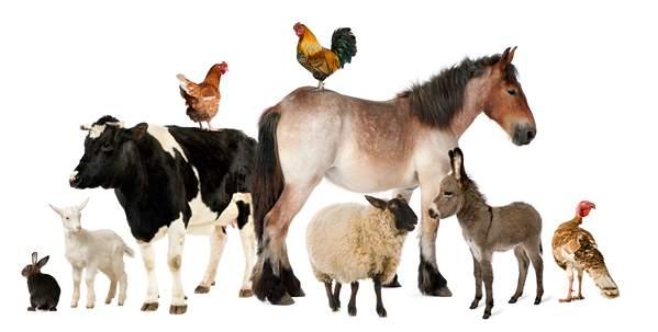 خرید حیوان