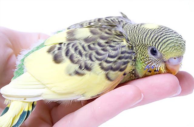 آموزش پرندگان چرخیدن به دور خود