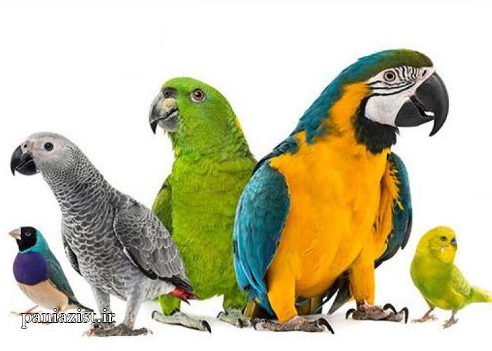 شناخت پرندگان زینتی