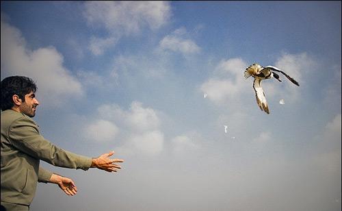 رها کردن پرنده خانگی در طبیعت