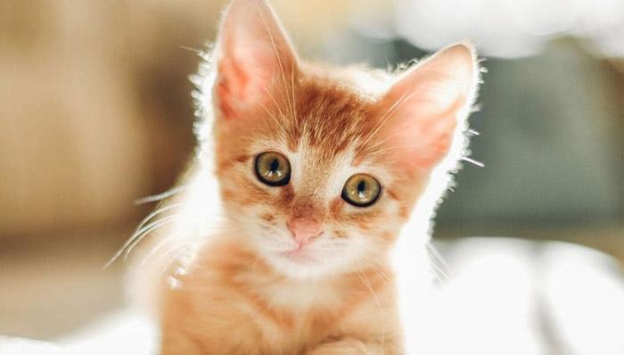 خطر بیماری زایی حیوانات خانگی