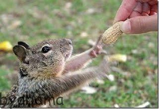 غذای سنجاب
