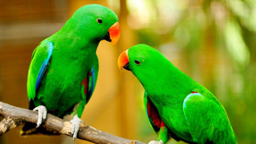 مراجعه به دامپزشک پرندگان زینتی