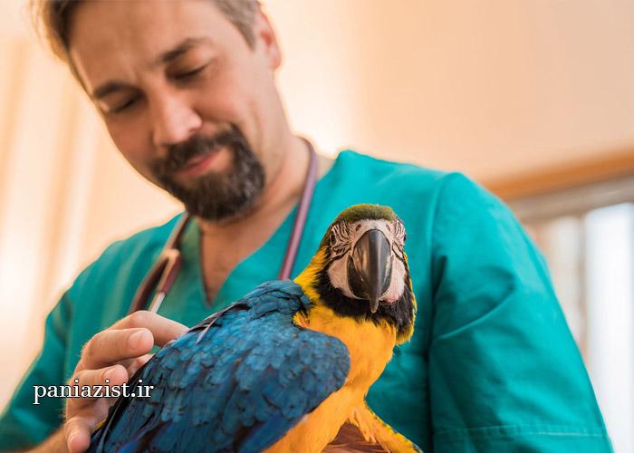 مراجعه به دامپزشک پرندگان