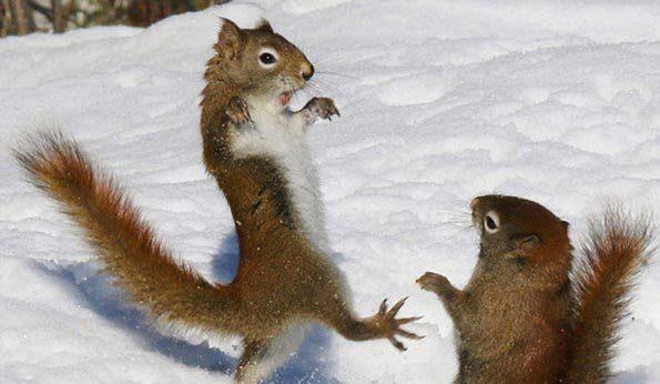 زندگی سنجاب ها در برف و زمستان