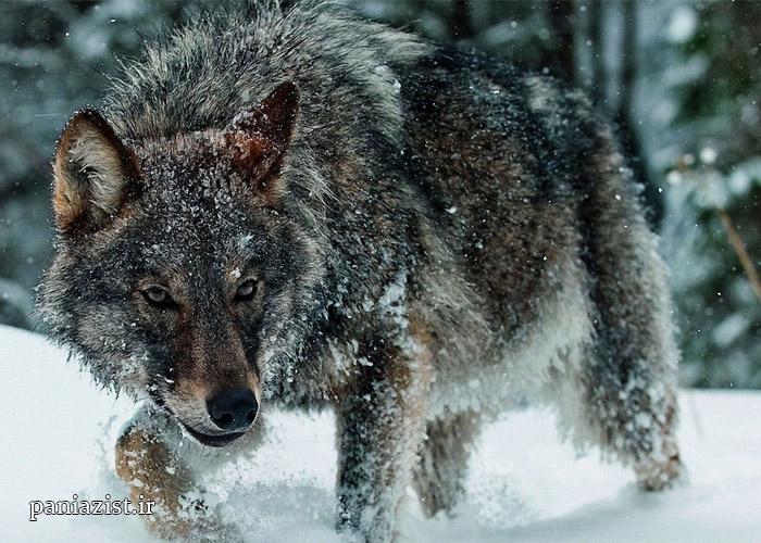 حیوانات و سرمای زمستان