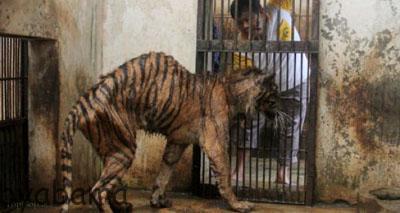 بدترین باغ وحش دنیا