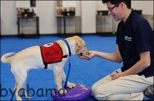 تعلیم سگها برای تشخیص سرطان