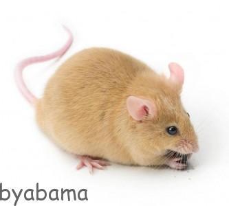 موش انتقام جو