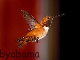 کوچکترین پرنده دنیا