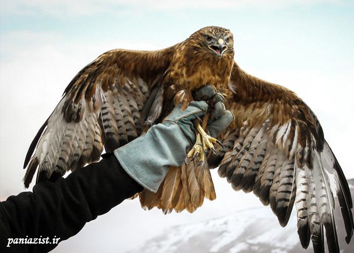 5 پرنده خطرناک دنیا
