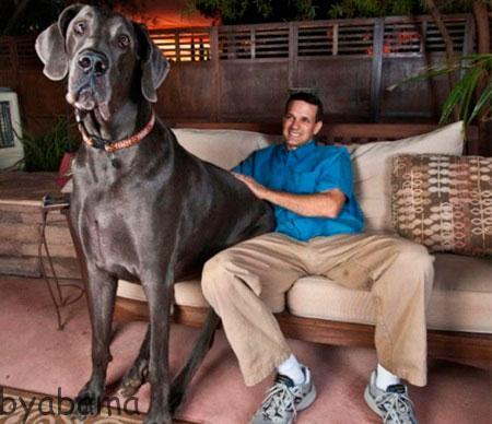 بزرگترین سگ