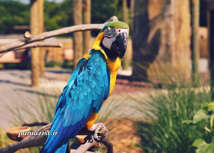 تغذیه صحیح پرندگان اگزوتیک