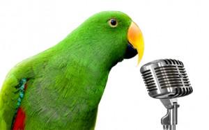آموزش سخنگو کردن طوطی