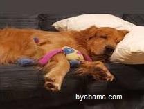 آیا سگ ها خواب می بینند؟