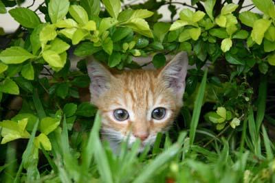 بیرون رفتن گربه از خانه