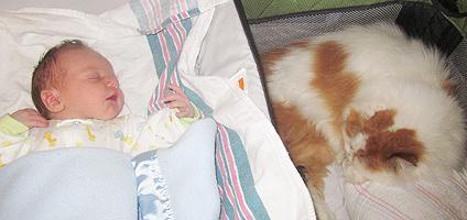 تماس نوزاد با گربه