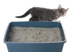 جای ظرف خاک گربه