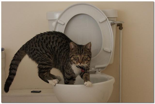 در امنیت نگهداشتن گربه