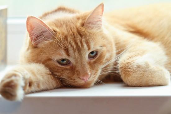 علائم بیماری در گربه آبستن