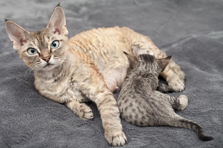 غریزه مادری گربه باردار