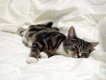 آیا نگه داشتن گربه در اتاق باعث آلرژی می شود؟