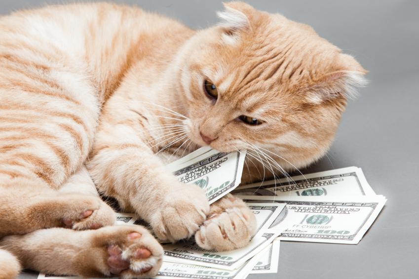 هزینه های نگهداری گربه