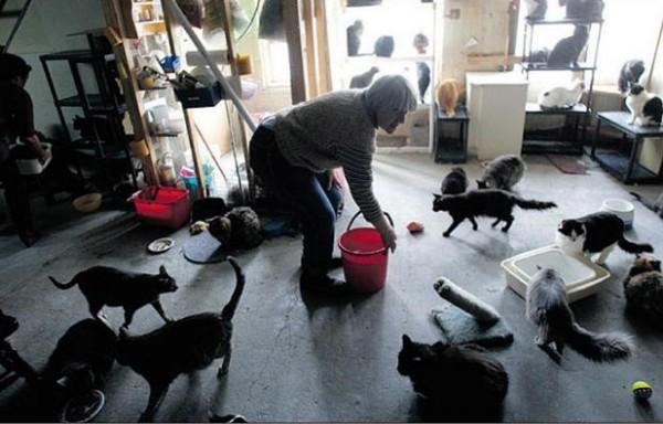 پناهگاه گربه های ولگرد