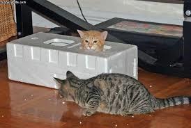 گربه ها چرا مخفی شدن را دوست دارند