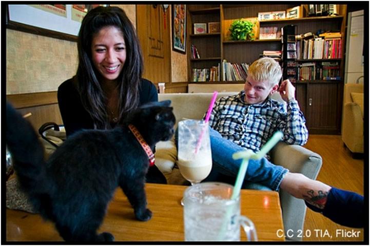 کافه گربه مونیخ آلمان