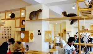 کافه گربه ها در مادرید اسپانیا