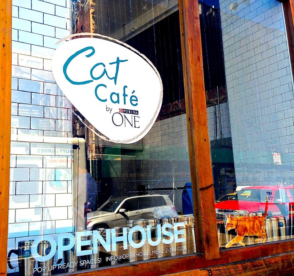 کافه گربه ها در نیویورک