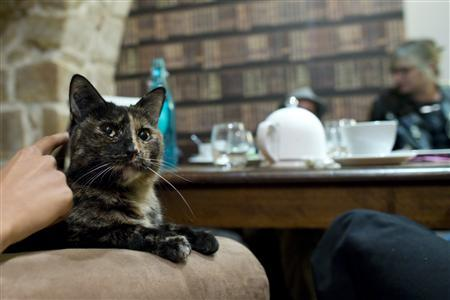 کافه گربه ها در پاریس فرانسه