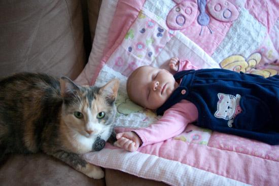 آیا موی گربه برای بچه مضر است؟