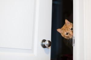 جاهی خطرناک برای گربه در خانه