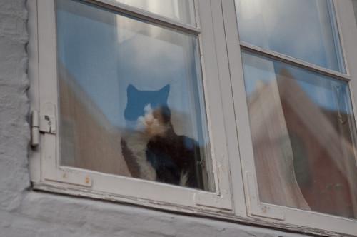 گربه پشت پنجره