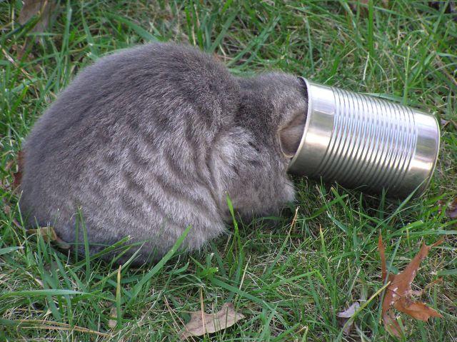 گیر افتادن گربه در قوطی