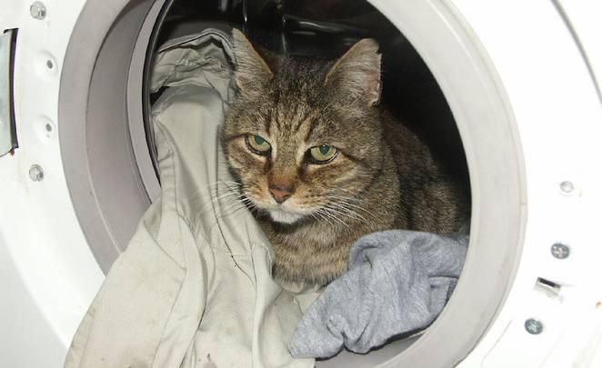 خطر ماشین لباسشویی برای گربه
