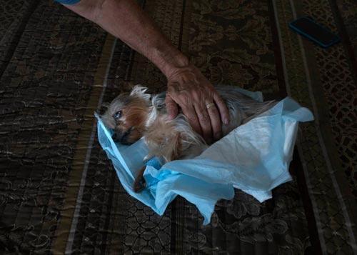 نحوه مواجه شدن با مرگ حیوان خانگی