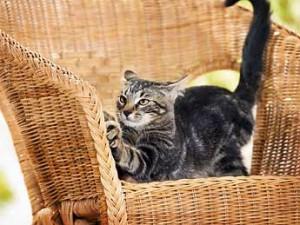 خرید اسکراچر برای گربه
