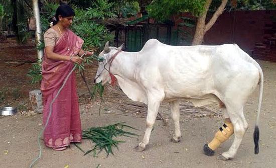 کمک به حیوانات معلول