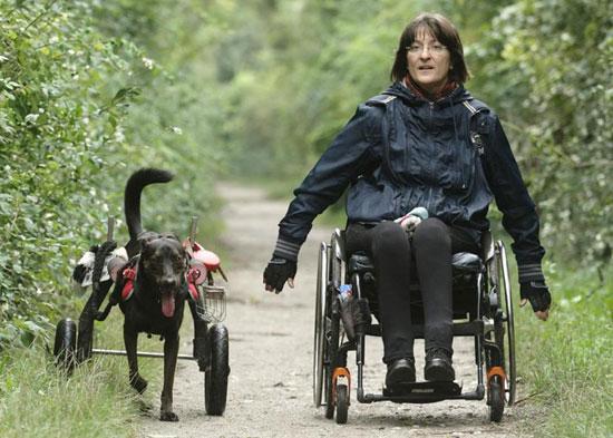 سگ با ویلچر