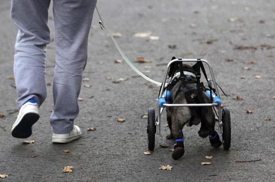 ساختن پای مصنوعی برای سگ
