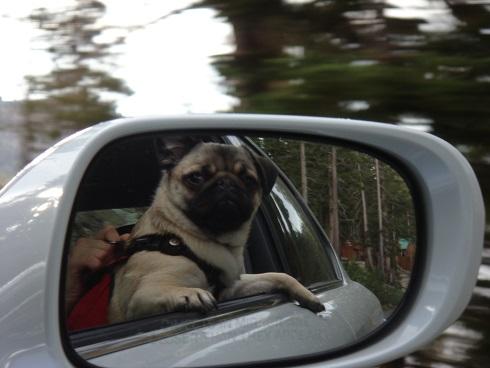 بهم خوردن حال سگ ها در ماشین