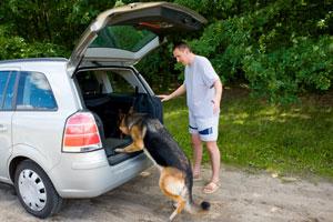 جلوگیری از استفراغ سگها در ماشین