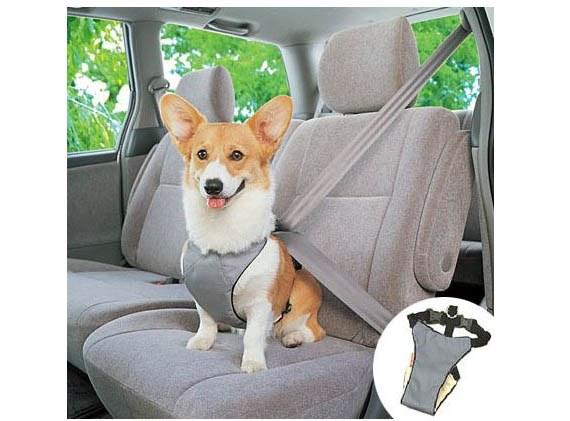 استفراغ سگ در ماشین