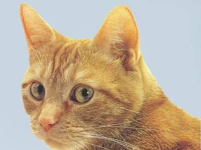 حرکت گوش های گربه
